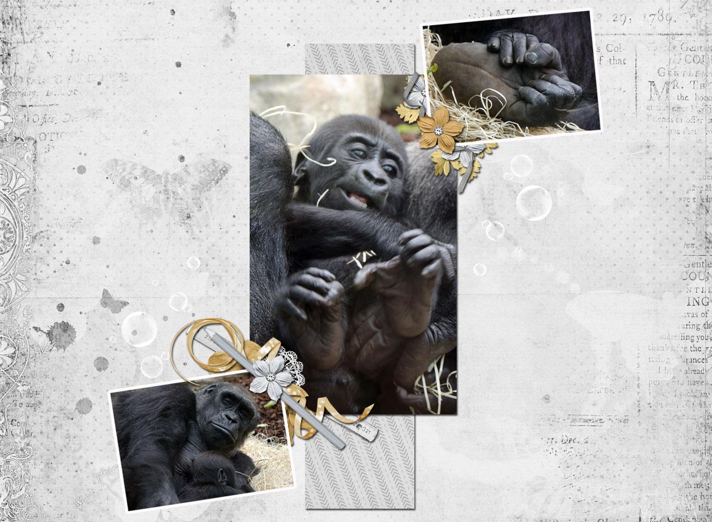 les-singes
