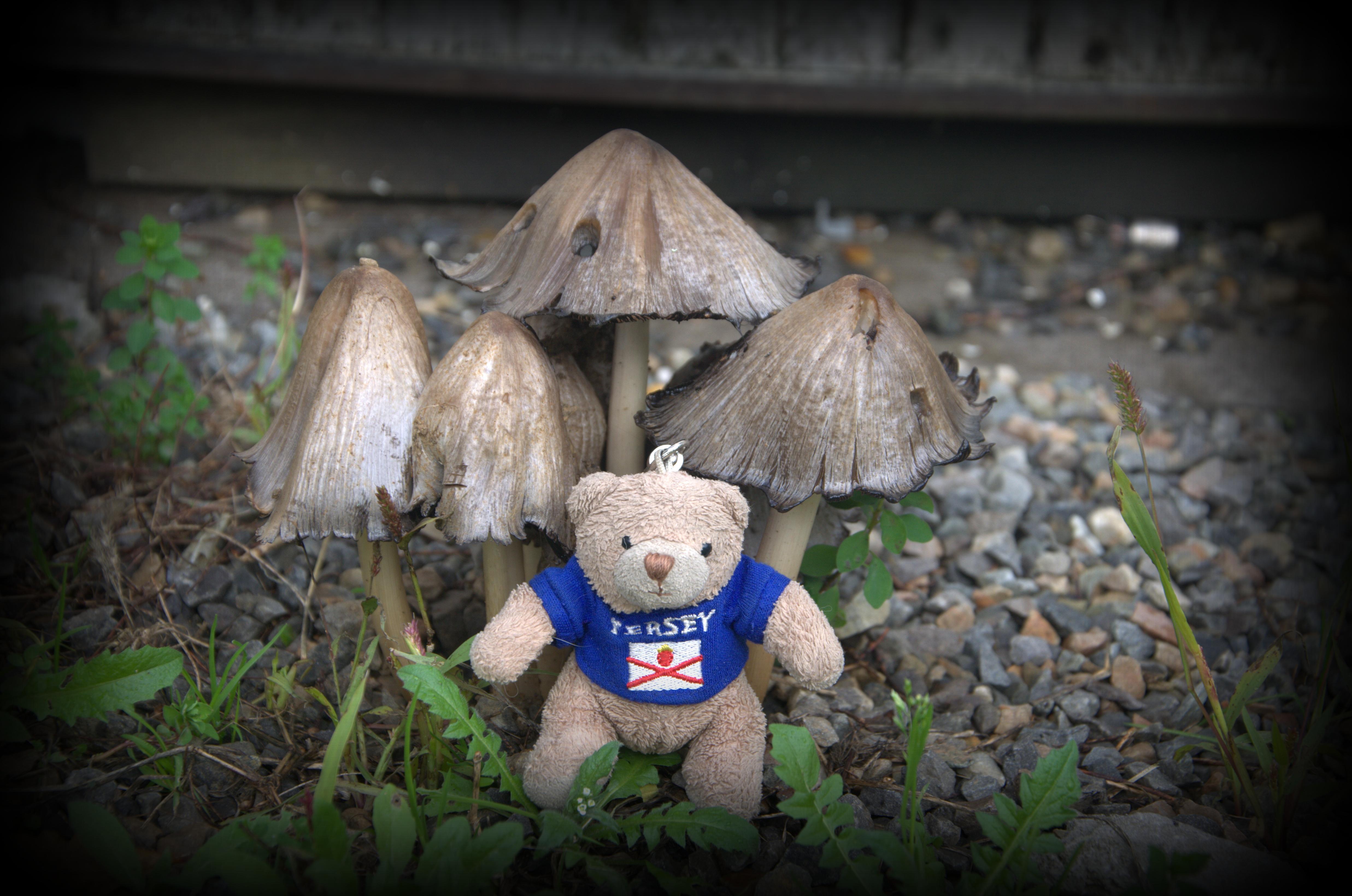 teddy45